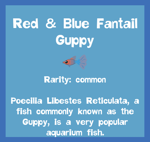 File:Fish2 Red & Blue Fantail Guppy.png