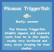 Fish2 Picasso Triggerfish