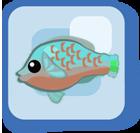 File:Fish Bicolor Parrotfish.png