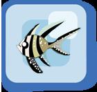 File:Fish Kaudern's Cardinalfish.png