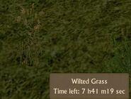 Wilted Grass