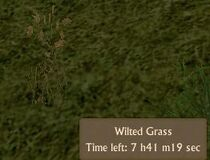 Wilted Grass