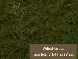 File:Wilted Grass.jpg