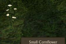 File:Cornflower Small.jpg