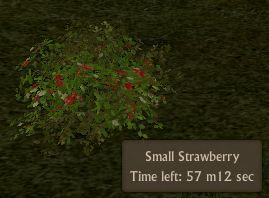 File:Strawberry Small.jpg