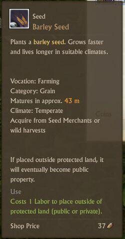 File:Barley Seed.jpg