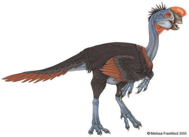 File:Oviraptor 03.jpg