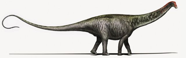 File:BrontosaurusIllustration.jpg