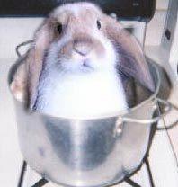 File:Bunny-BunnySittingInACookingPot.jpg