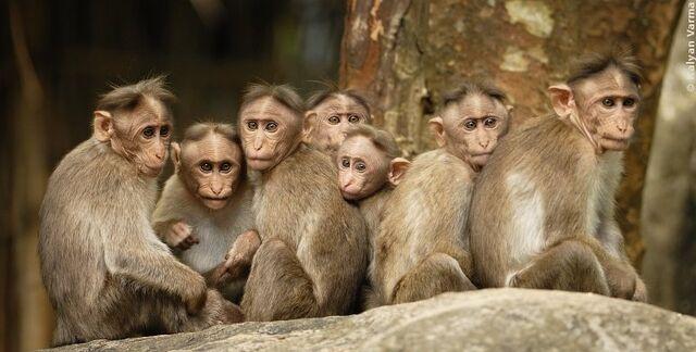 File:Monkeys.jpg