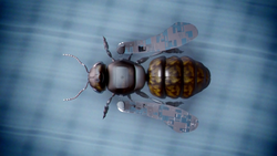 Bug-Eyed Bandit's robotic honey bee