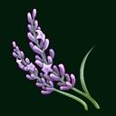File:Lavender (ToV).png