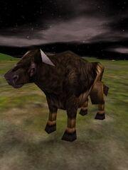 Auroch Cow Live