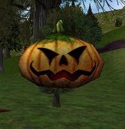 Pumpkin Buffer Live