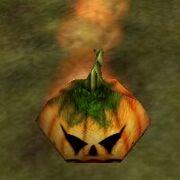Sprouting Pumpkin Vine Live