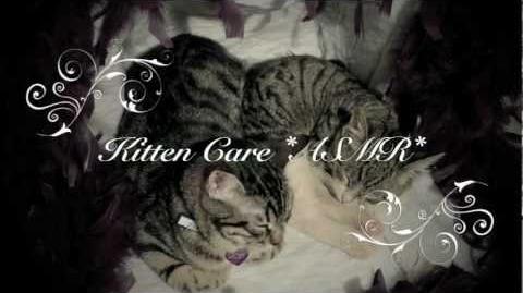 ☾ASMR☽ ✰Gentle Kitten Care Slow Grooming & Putting Them to Sleep