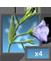 PL flax 4