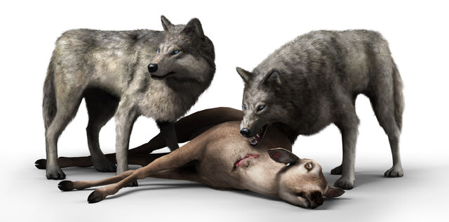File:Wolves hunting.jpg
