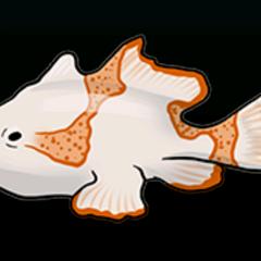 躄鱼 - 稀有度:普通,尺寸:小