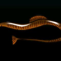 尖嘴鱼 - 稀有度:稀有,尺寸:小
