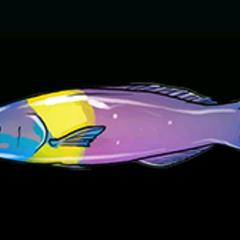 尖胸隆头鱼 - 稀有度:普通,尺寸:小