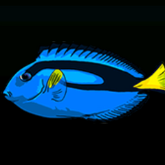 蓝刀鲷 - 稀有度:普通,尺寸:小