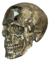 AC4 Crystal Skull render.png