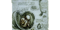 "Database: ""The Fetus In The Womb"""