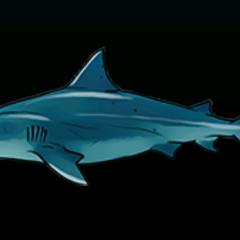 Bull Shark - 稀有度:非常稀有,尺寸:大
