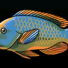 虹彩鹦嘴鱼 - 稀有度:非常稀有,尺寸:中