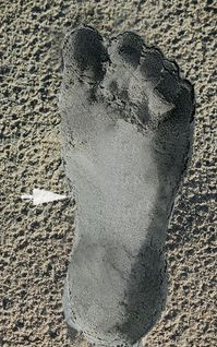 File:Hyperpronated Foot Imprint.jpg