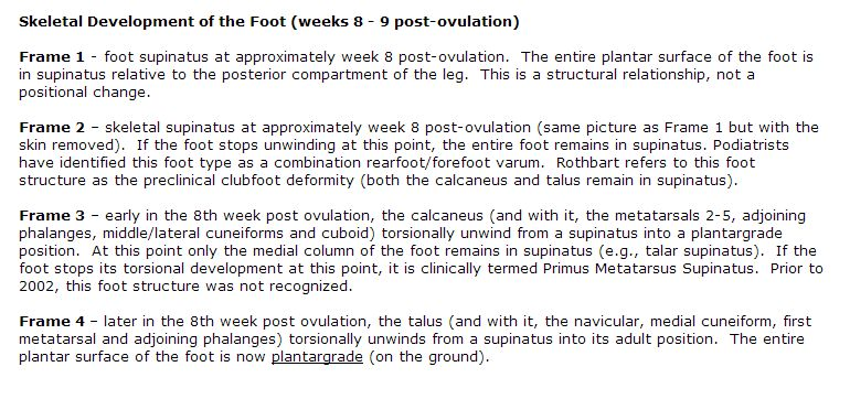 Description of Foot Ontogenesis