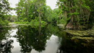 Everglades & Ally-Gators (183)