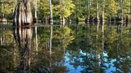 Everglades & Ally-Gators (755)