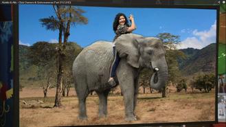 Trish Elephant