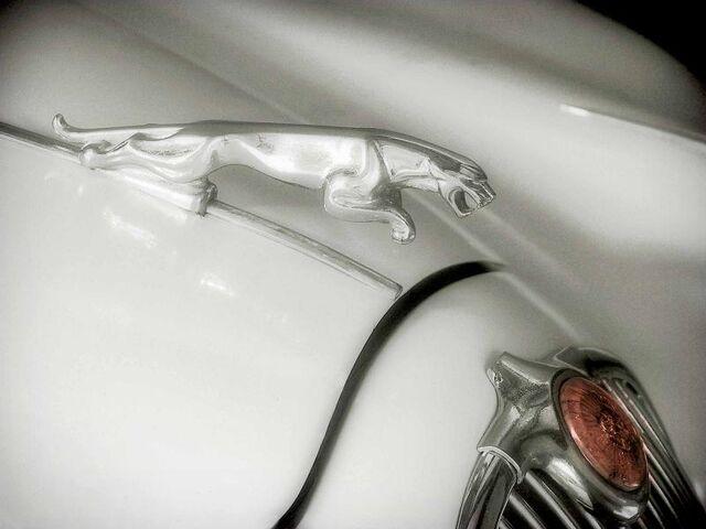File:Jaguarleaper.jpg