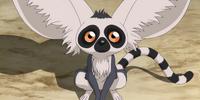 Lémur volador de cola anillada
