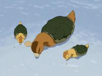 Turtle ducks