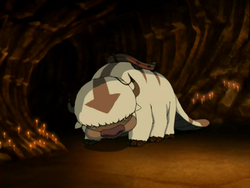 Appa in a cave