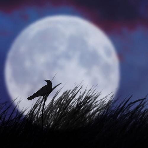 Moon In Avatar Movie: Image - The Bird And The Moon II.jpg