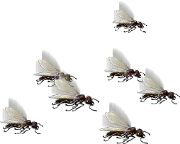 File:Army of Ants.png