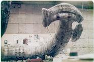 Alien Roder Nichols19