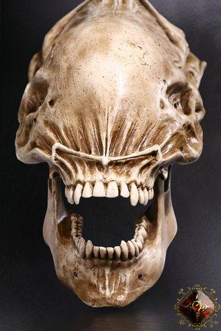 File:Predator skull.jpg