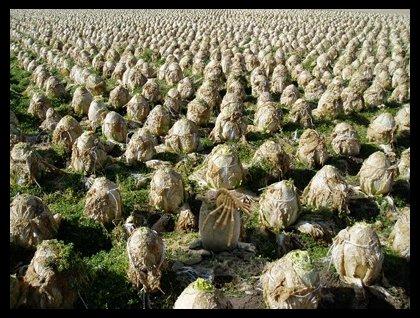 File:Alien cabbage patch.jpg