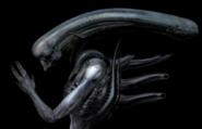 Normal creatures017