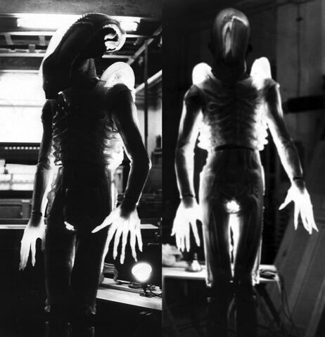 File:Translucent Alien.jpg