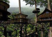 Faberian tree House