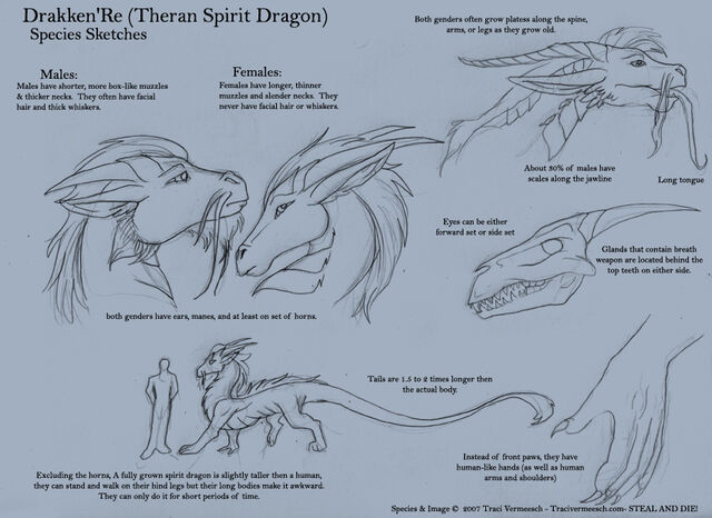 File:Spirit Dragon Sketches by ulario.jpg