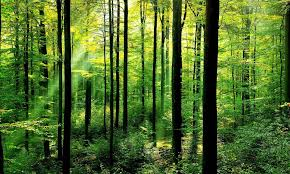 File:Forest1.png
