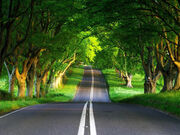 Road-in-the-woods-wallpaper-1